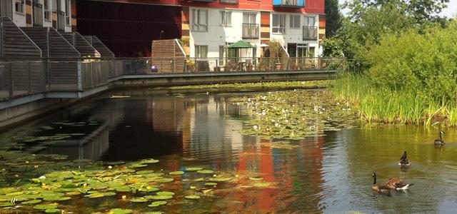 Greenwich Peninsula Ecology Park
