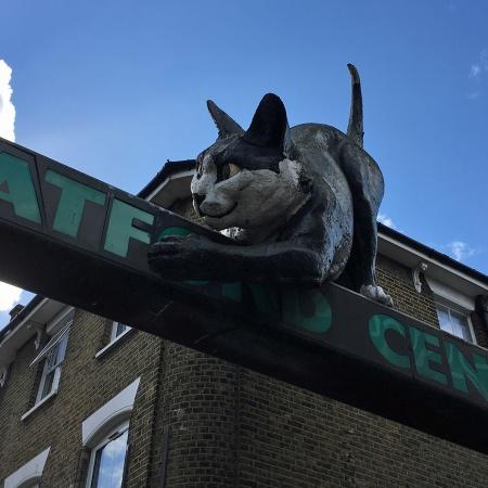 Catford cat